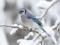 عکس زیبای پرنده در زمستان