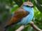 پرنده آبی زیبا