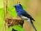 عکس زیباترین پرنده گان