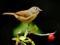 والپیپر زیبای پرنده