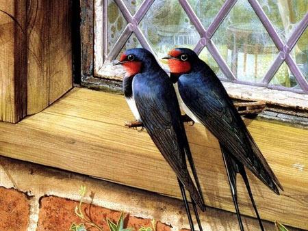 عکس پرنده پرستو کنار پنجره aks parandeh parasto