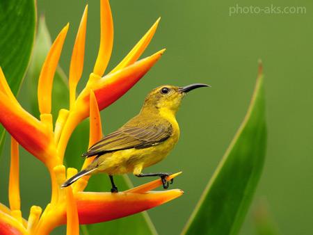 عکس زیبای پرندگان hd wallpaper of birds