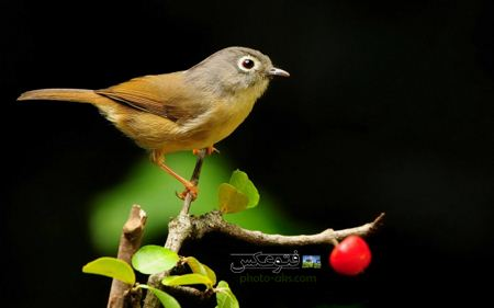والپیپر زیبای پرنده birds wallpaper