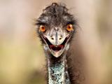 عکس بامزه شترمرغ