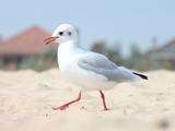 پرنده مرغ دریایی روی شن ساحل