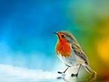والپیپر زیبا از پرنده ها