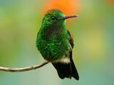 پرنده زیبا با پر های سبز