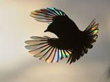 عکس بالهای پرنده در پرواز