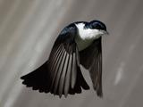 عکس پرواز زیبای پرنده