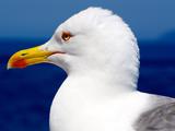 عکس مرغ دریایی