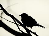 عکس پرنده روی شاخه درخت