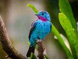 پرنده آبی روی شاخه درخت