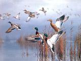 نقاشی پرواز اردک ها از برکه