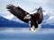 لحضه شکار عقاب تیز پرواز