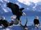 عقاب های سرسفید