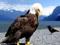 زیباترین عکس عقاب