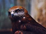 عکس دیدنی از عقاب