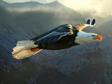 پرواز بسیار زیبای پرنده عقاب