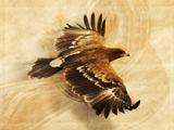 نقاشی پرواز عقای طلایی