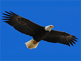 سلطان پرندگان