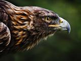 عکس عقاب ایرانی طلایی