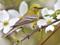 عکس بلبل در فصل بهار