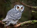 عکس پرنده جغد زیبا