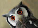 عکس نگاه جالب پرنده جغد