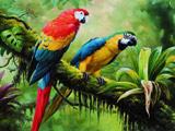 طوطی های رنگارنگ استوایی