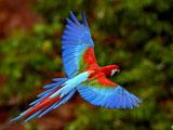 کد تصادفی پرندگان