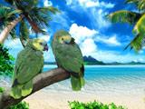 عکس طوطی های سبز زیبا