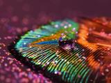 والپیپر زیبای پر طاووس