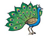عکس نقاشی کارتونی طاووس