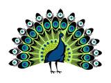 نقاشی کارتونی پرنده بهشتی طاووس