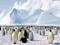 اجتماع پنگوئن های امپراتور