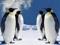 تصویر 4 پنگوئن بزرگ