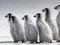 عکس بچه پنگوئن های امپراتور