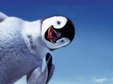 عکس بامزه از جوجه پنگوئن