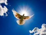 پرواز کبوتر