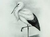نقاشی سیاه و سفید لک لک
