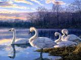 نقاشی بسیار زیبا پرندگان قو