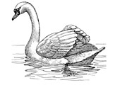 عکس نقاشی پرنده قو