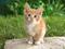 عکس بچه گربه ناز و بامزه
