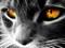 والپیپر فانتزی گربه سیاه