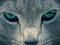 چشم گربه خاکستری