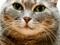 عکس نزدیک از صورت گربه