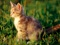 عکس بچه گربه ناز و ملوس