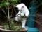 بچه گربه سفید با مزه