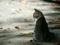 عکس بچه گربه شهری