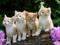 عکس نازترین بچه گربه ها